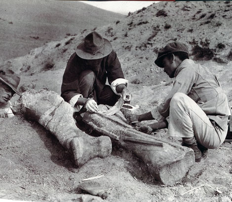 Huge dinosaur bones found at Flaming Cliff