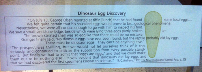 How the eggs were found